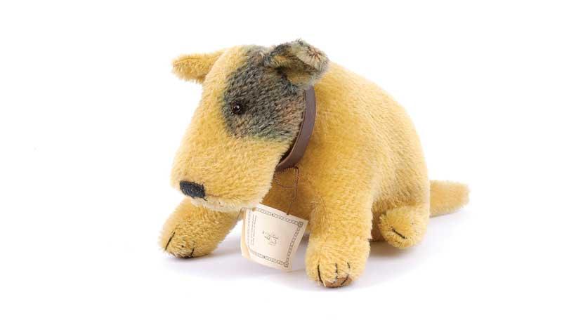 teddy of witney